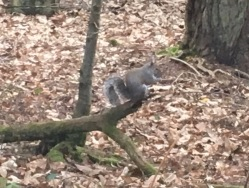 This little chap entertained us for ages gathering his nuts