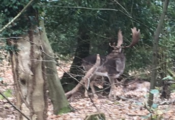 One of the three deer so close to the van were a absolute pleasure to see